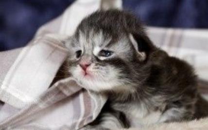 ヤリマン女は寂しがり屋の猫と同じ