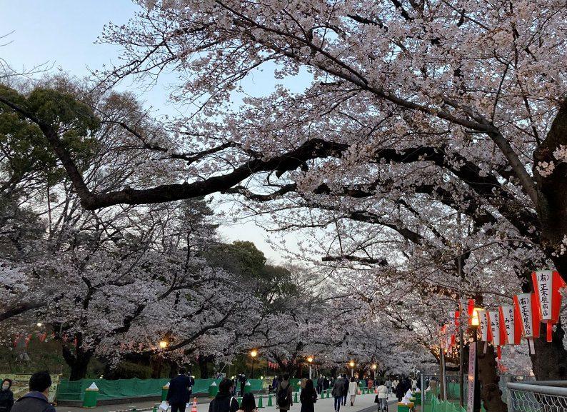 上野公園花見
